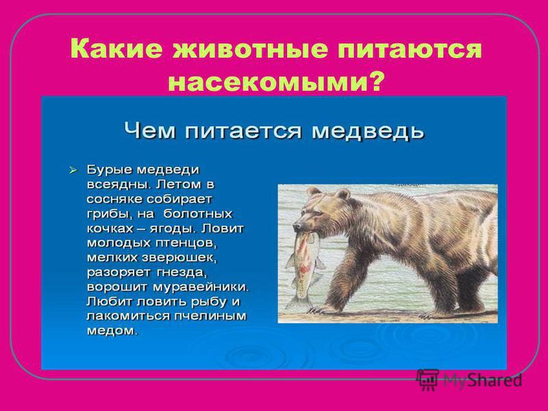 Какие животные питаются насекомыми?