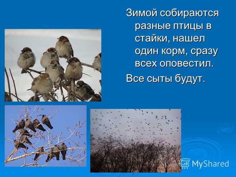 Зимой собираются разные птицы в стайки, нашел один корм, сразу всех оповестил. Все сыты будут.