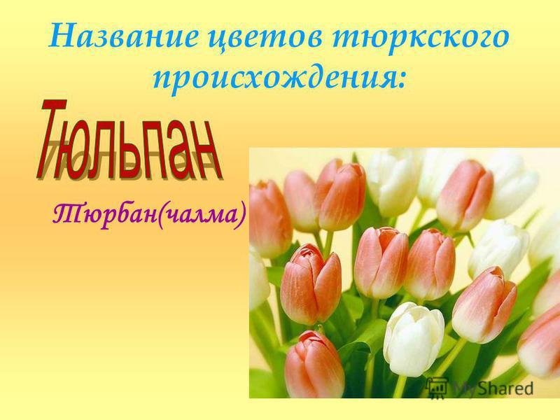 Название цветов тюркского происхождения: Тюрбан(чалма)
