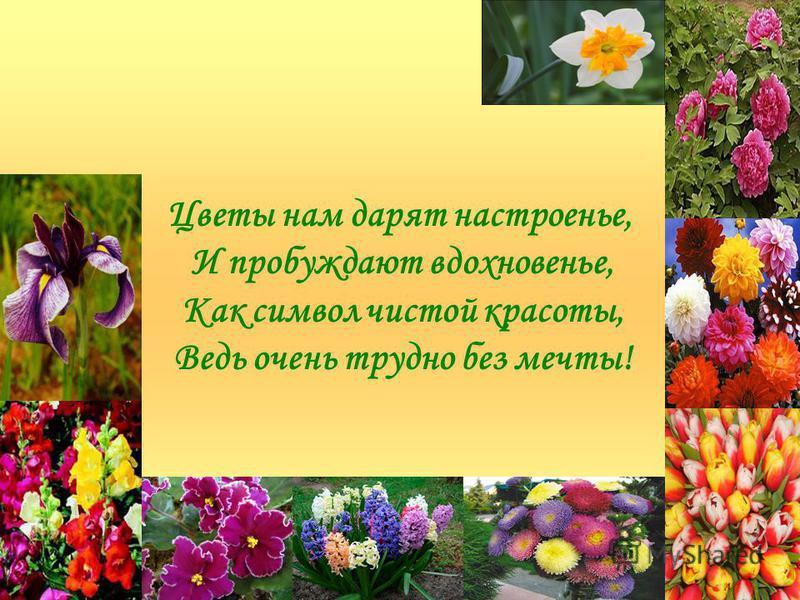 Цветы нам дарят настроенье, И пробуждают вдохновенье, Как символ чистой красоты, Ведь очень трудно без мечты!