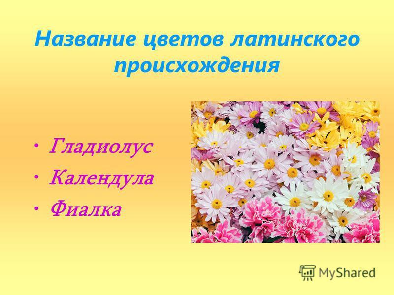 Название цветов латинского происхождения Гладиолус Календула Фиалка