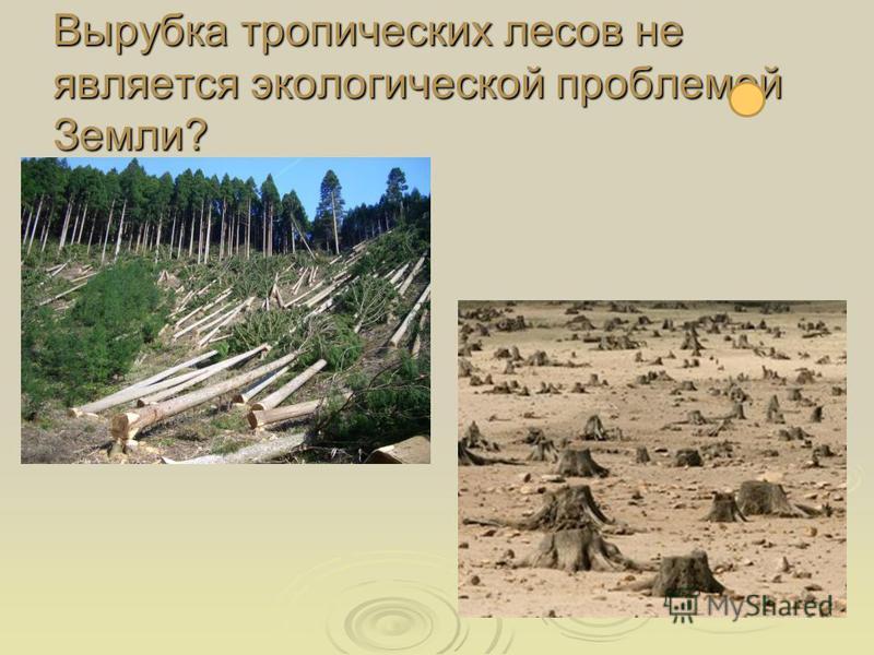 Вырубка тропических лесов не является экологической проблемой Земли?