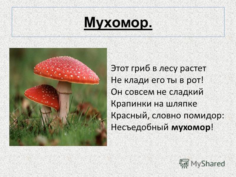 Мухомор. Этот гриб в лесу растет Не клади его ты в рот! Он совсем не сладкий Крапинки на шляпке Красный, словно помидор: Несъедобный мухомор!