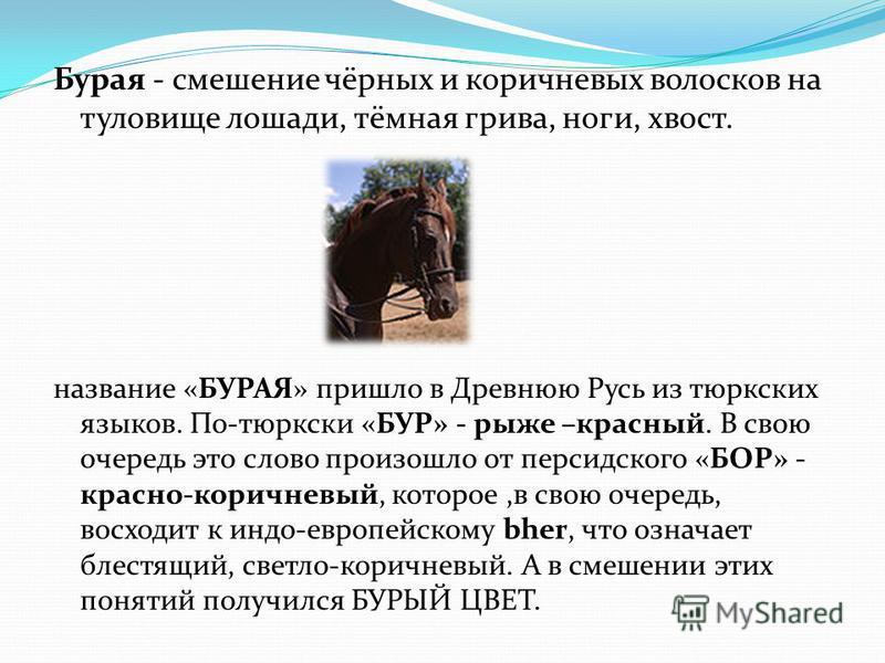Бурая - смешение чёрных и коричневых волосков на туловище лошади, тёмная грива, ноги, хвост. название «БУРАЯ» пришло в Древнюю Русь из тюркских языков. По-тюркски «БУР» - руже –красный. В свою очередь это слово произошло от персидского «БОР» - красно