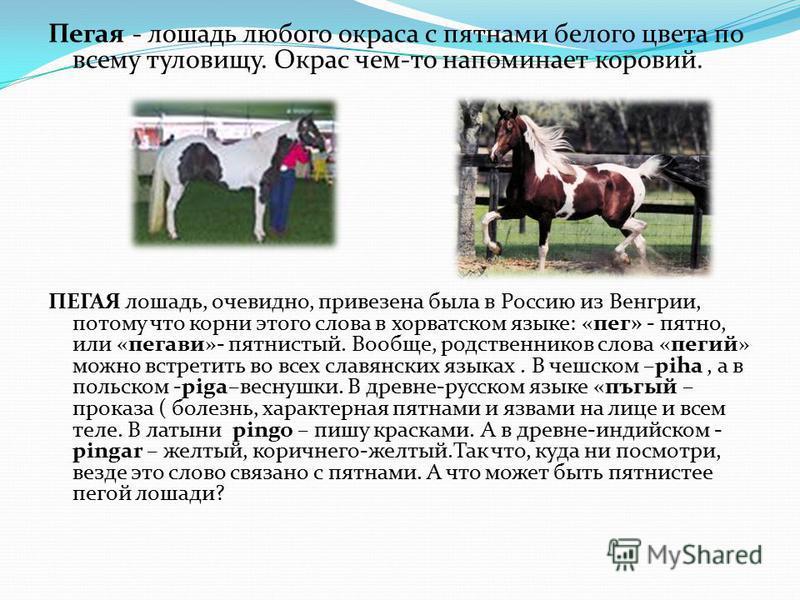 Пегая - лошадь любого окраса с пятнами белого цвета по всему туловищу. Окрас чем-то напоминает коровий. ПЕГАЯ лошадь, очевидно, привезена была в Россию из Венгрии, потому что корни этого слова в хорватском языке: «пег» - пятно, или «пегави»- пятнисты