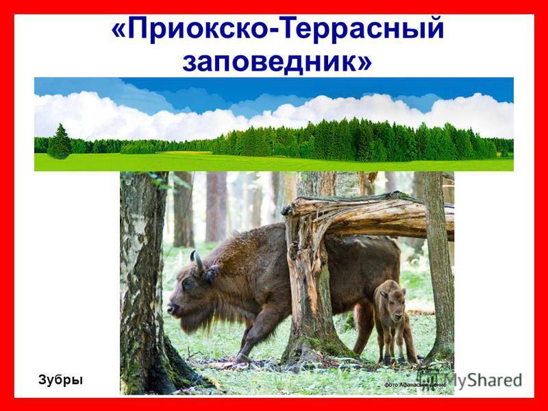 «Приокско-Террасный заповедник» Зубры