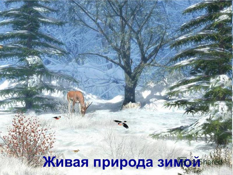 Живая природа зимой