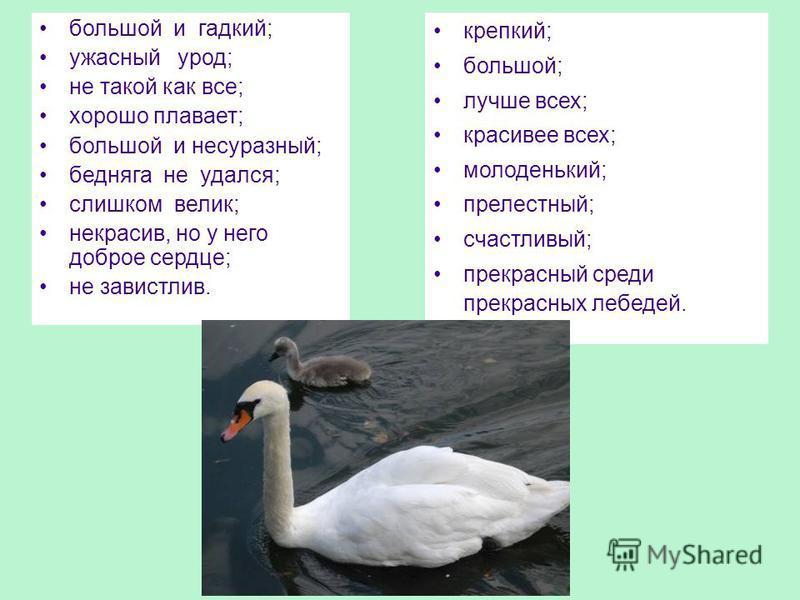большой и гадкий; ужасный урод; не такой как все; хорошо плавает; большой и несуразный; бедняга не удался; слишком велик; некрасив, но у него доброе сердце; не завистлив. крепкий; большой; лучше всех; красивее всех; молоденький; прелестный; счастливы