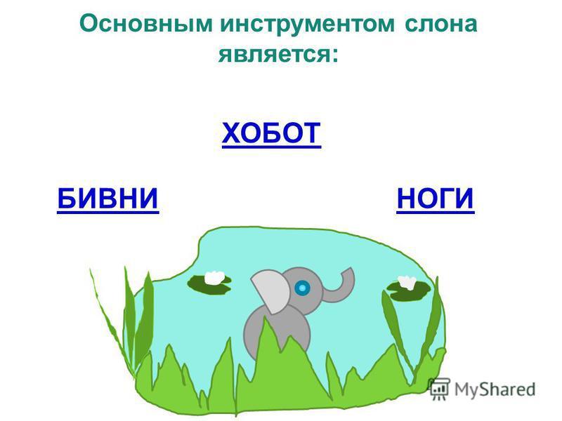 Основным инструментом слона является: ХОБОТ БИВНИНОГИ