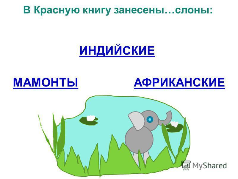 В Красную книгу занесены…слоны: ИНДИЙСКИЕ МАМОНТЫАФРИКАНСКИЕ