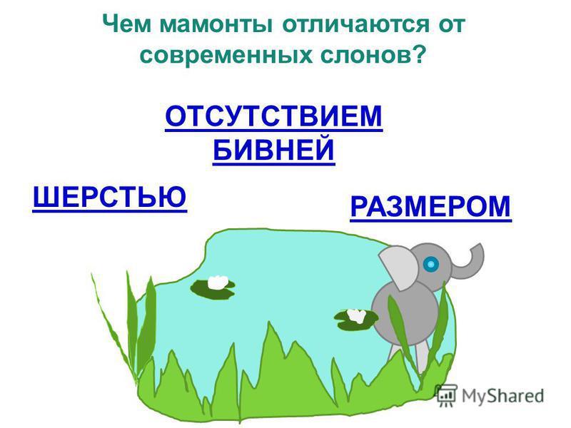 Чем мамонты отличаются от современных слонов? ОТСУТСТВИЕМ БИВНЕЙ ШЕРСТЬЮ РАЗМЕРОМ