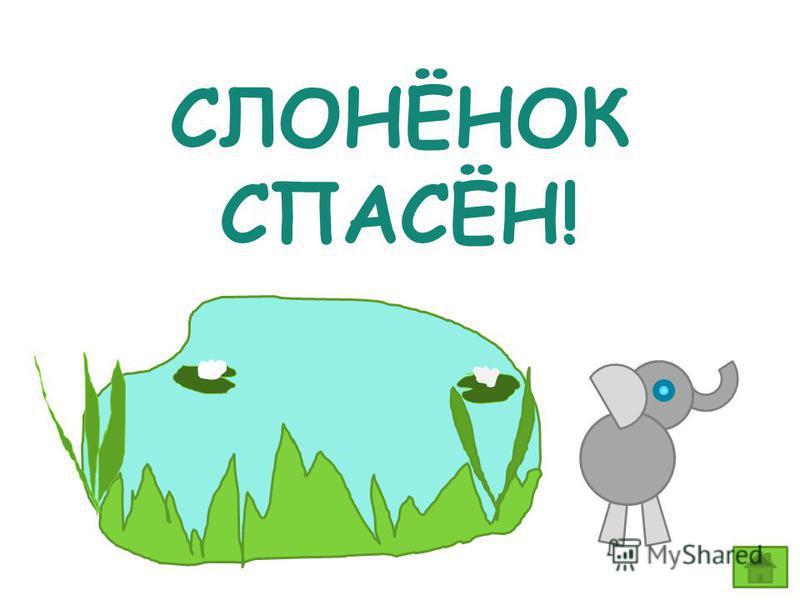 СЛОНЁНОК СПАСЁН!
