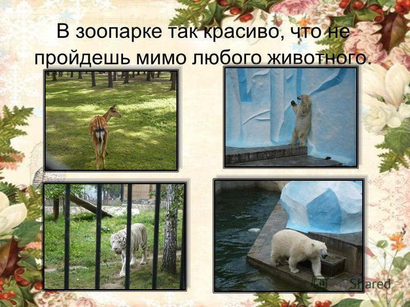 В зоопарке так красиво, что не пройдешь мимо любого животного.