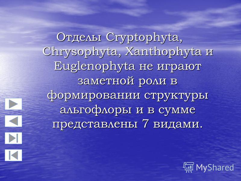 Отделы Cryptophyta, Chrysophyta, Xanthophyta и Euglenophyta не играют заметной роли в формировании структуры альгофлоры и в сумме представлены 7 видами.