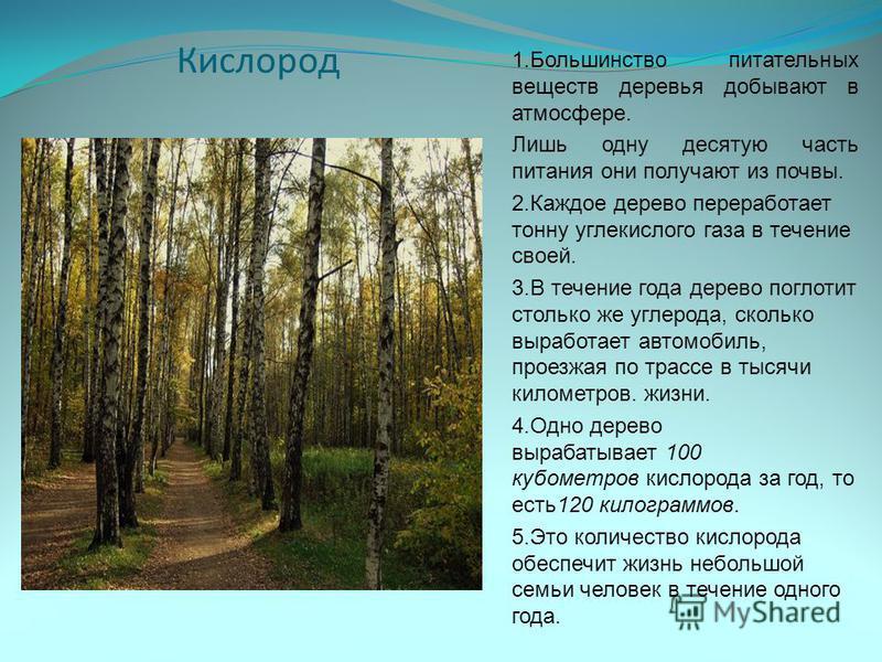 1. Большинство питательных веществ деревья добывают в атмосфере. Лишь одну десятую часть питания они получают из почвы. 2. Каждое дерево переработает тонну углекислого газа в течение своей. 3. В течение года дерево поглотит столько же углерода, сколь