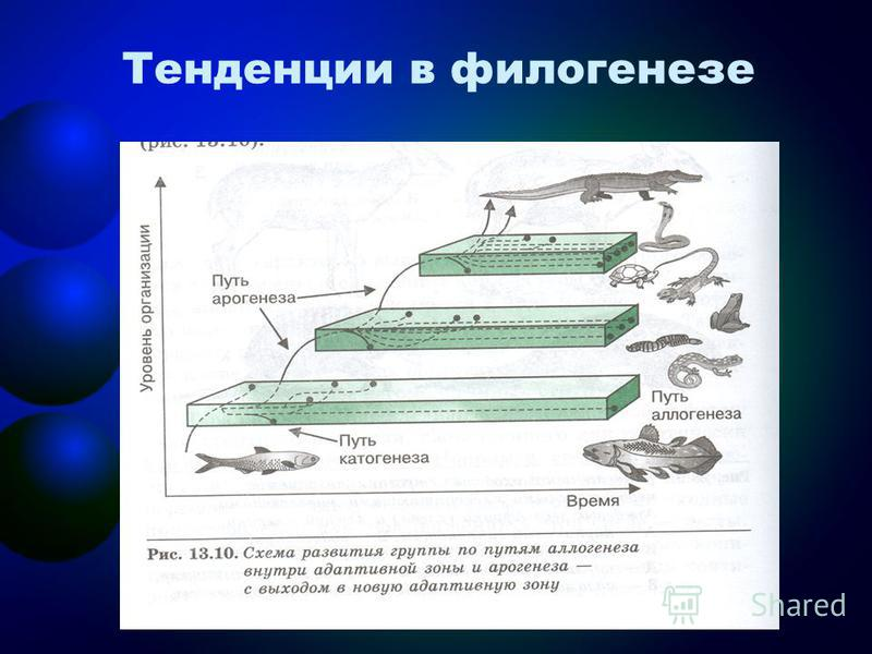 Тенденции в филогенезе