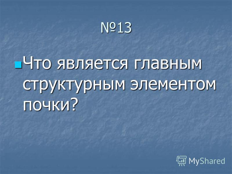 13 Что является главным структурным элементом почки? Что является главным структурным элементом почки?