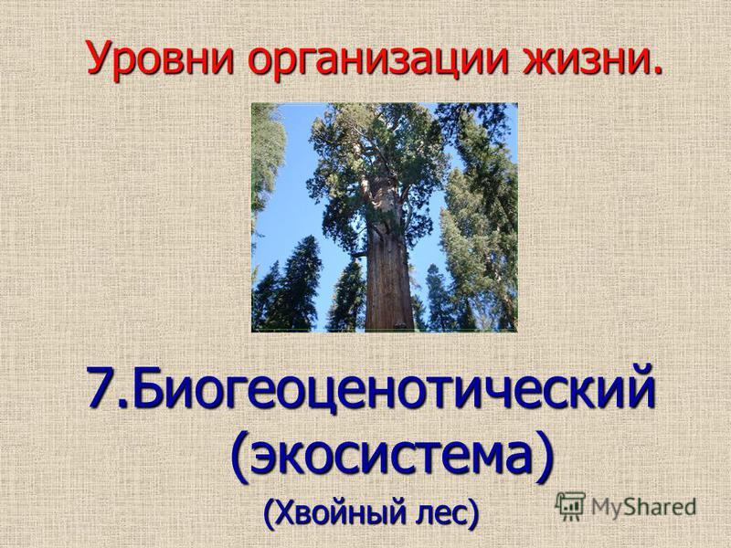 Уровни организации жизни. 7. Биогеоценотический (экосистема) (Хвойный лес)