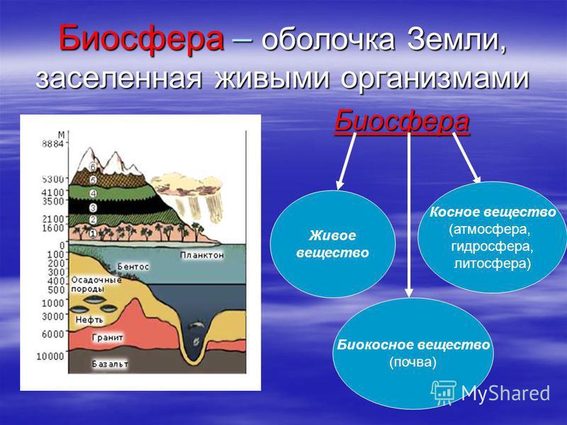 Биосфера – оболочка Земли, заселенная живыми организмами Биосфера Биосфера Живое вещество Биокосное вещество (почва) Косное вещество (атмосфера, гидросфера, литосфера)