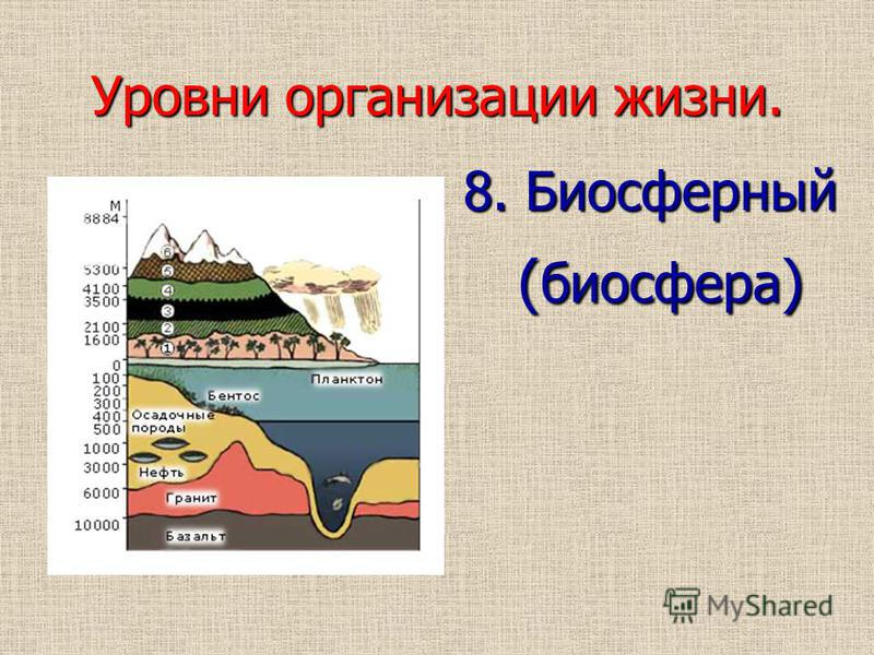 Уровни организации жизни. 8. Биосферный ( биосфера ) ( биосфера )