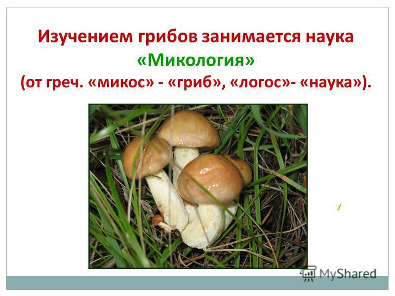 Изучением грибов занимается наука «Микология» (от греч. «микоз» - «гриб», «логос»- «наука»).