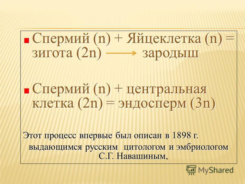 Спермий (n) + Яйцеклетка (n) = зигота (2n) зародыш Спермий (n) + центральная клетка (2n) = эндосперм (3n) Этот процесс впервые был описан в 1898 г. выдающимся русским цитологом и эмбриологом С.Г. Навашиным.