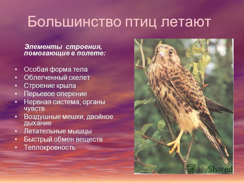 Большинство птиц летают Элементы строения, помогающие в полете: Особая форма тела Облегченный скелет Строение крыла Перьевое оперение Нервная система, органы чувств Воздушные мешки, двойное дыхание Летательные мышцы Быстрый обмен веществ Теплокровнос