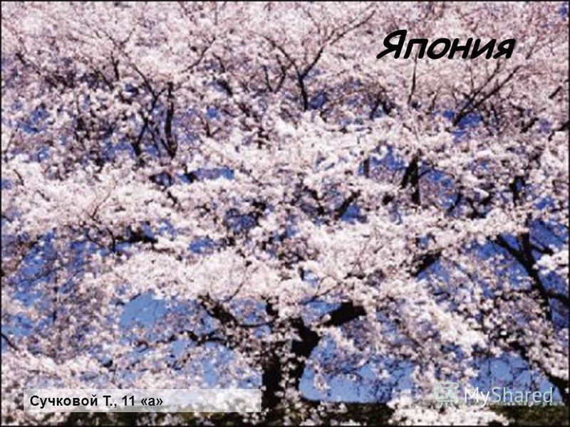 Япония Сучковой Т., 11 «а»