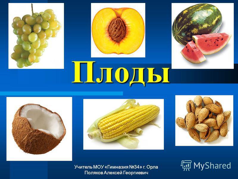 Плоды Учитель МОУ «Гимназия 34» г. Орла Поляков Алексей Георгиевич