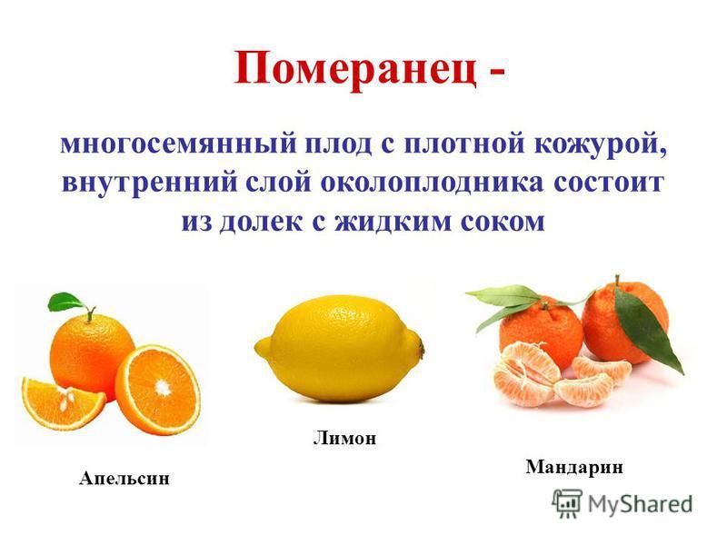 Померанец - многосемянный плод с плотной кожурой, внутренний слой околоплодника состоит из долек с жидким соком Апельсин Лимон Мандарин