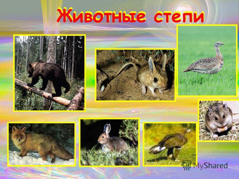 Животные степи Животные степи
