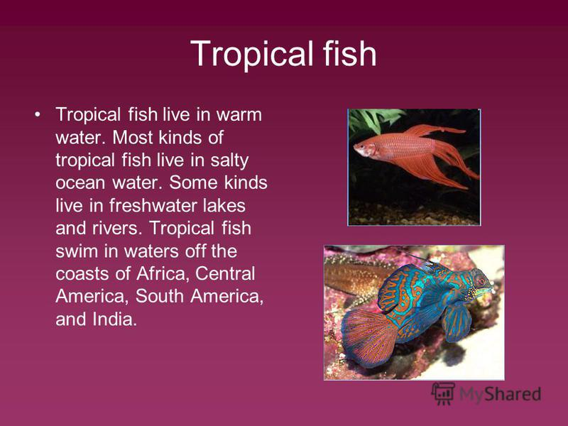 Tropical fish Tropical fish live in warm water. Most kinds of tropical fish live in salty ocean water. Some kinds live in freshwater lakes and rivers. Tropical fish swim in waters off the coasts of Africa, Central America, South America, and India.