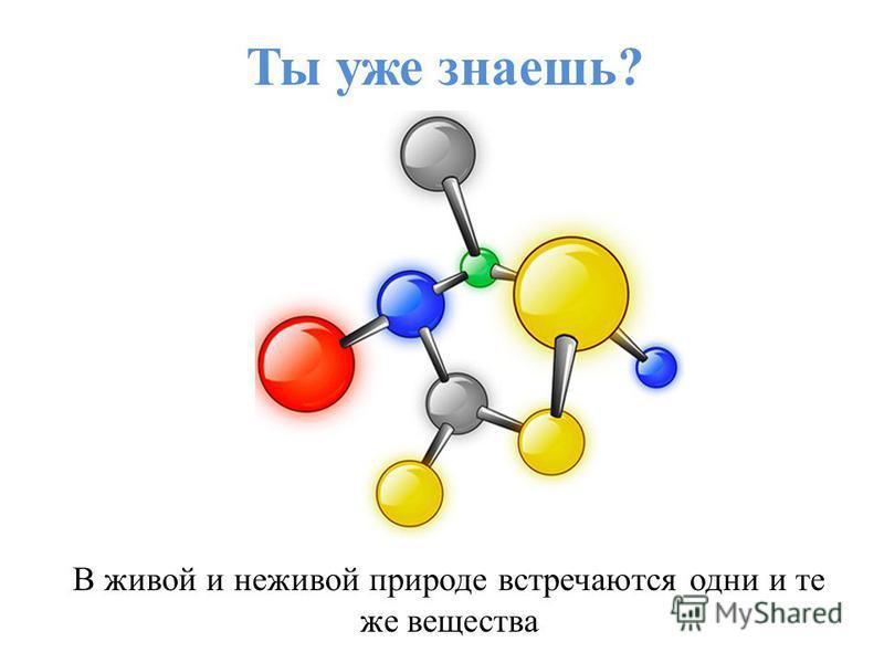 Ты уже знаешь? В живой и неживой природе встречаются одни и те же вещества