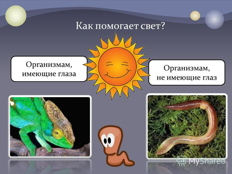 Организмам, имеющие глаза Организмам, не имеющие глаз Как помогает свет?