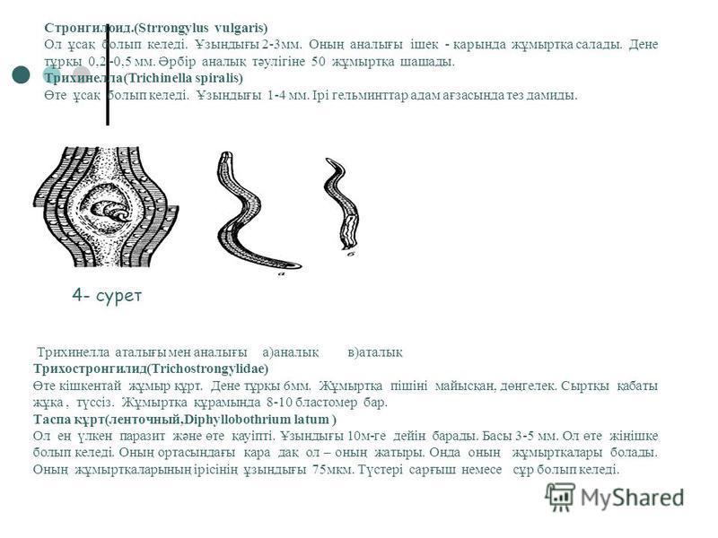 Власоглав(Trchocephalus) Ол өте жіңішке, ұзындығы 3-5 см. Жұмыртқасын сары, қоңыр түсті, пішіні лимон тәріздес болып каледі.Артқы бөлігі толығырақ болып каледі. Ал анналығсының жатыры жұмыртқаға толы болады. а)анналық б)аталық 1)алғы бөлігі 2)артқы б