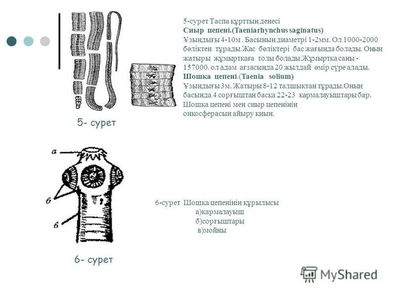 Стронгилоид.(Strrongylus vulgaris) Ол ұсақ болып каледі. Ұзындығы 2-3 мм. Оның анналығы ішек - қарттттттында жұмыртқа салады. Дене тұрқы 0,2 -0,5 мм. Әрбір анналық тәулігіне 50 жұмыртқа шашады. Трихинелла(Trichinella spiralis) Өте ұсақ болып каледі.