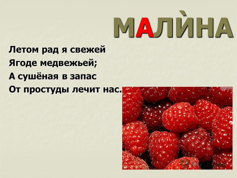 МАЛЍНА Летом рад я свежей Ягоде медвежьей; А сушёная в запас От простуды лечит нас.