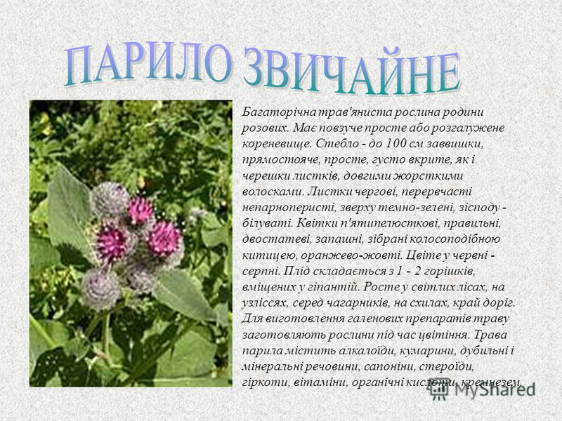 Багаторiчна трав'яниста рослина родини розових. Має повзуче просте або розгалужене кореневище. Стебло - до 100 см заввишки, прямостояче, просте, густо вкрите, як i черешки листкiв, довгими жорсткими волосками. Листки черговi, перервчасті непарноперис