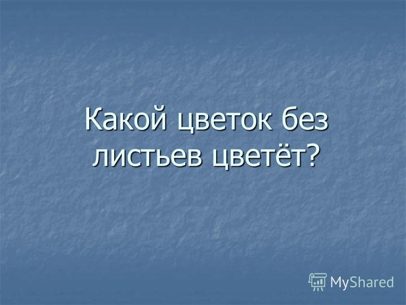 Какой цветок без листьев цветёт?