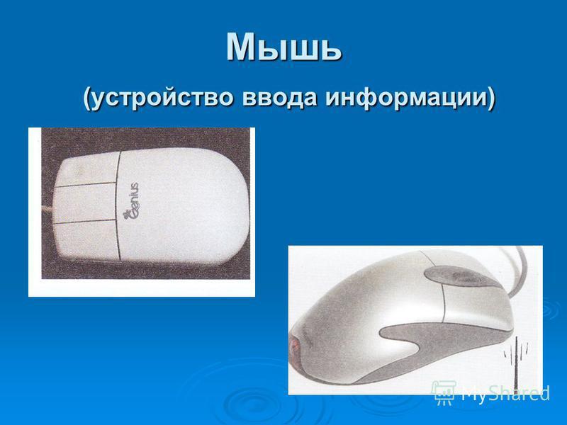 Мышь (устройство ввода информации)