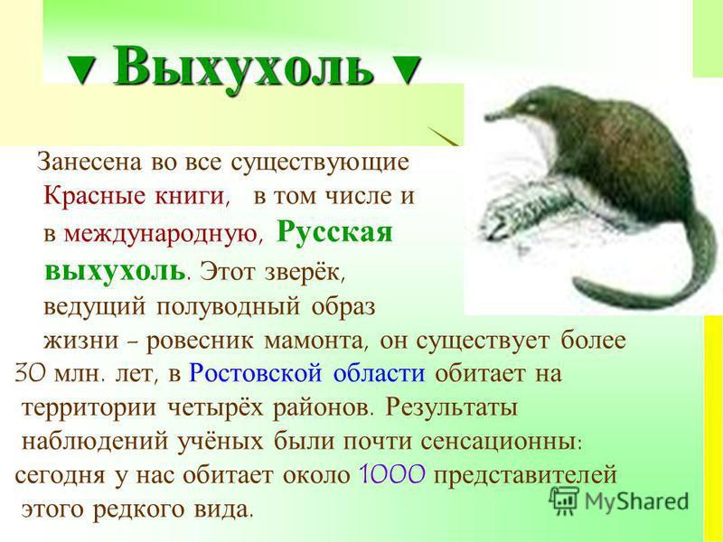 Выхухоль Выхухоль Занесена во все существующие Красные книги, в том числе и в международную, Русская выхухоль. Этот зверёк, ведущий полуводный образ жизни - ровесник мамонта, он существует более 30 млн. лет, в Ростовской области обитает на территории