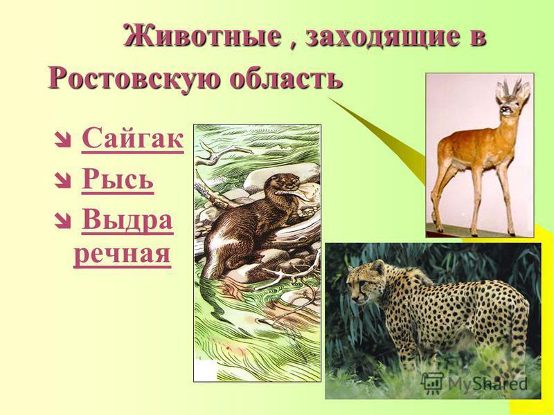 Животные, заходящие в Ростовскую область Животные, заходящие в Ростовскую область Сайгак Рысь Выдра речная Выдра речная