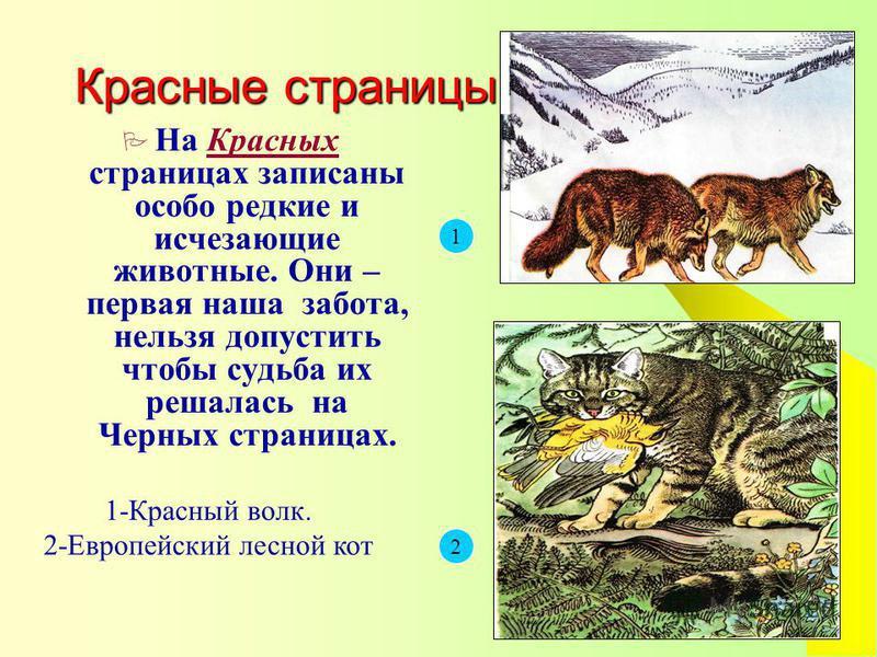 Красные страницы На Красных страницах записаны особо редкие и исчезающие животные. Они – первая наша забота, нельзя допустить чтобы судьба их решалась на Черных страницах. 1 2 1-Красный волк. 2-Европейский лесной кот