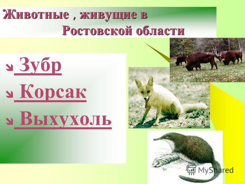 Животные, живущие в Ростовской области Зубр Корсак Выхухоль