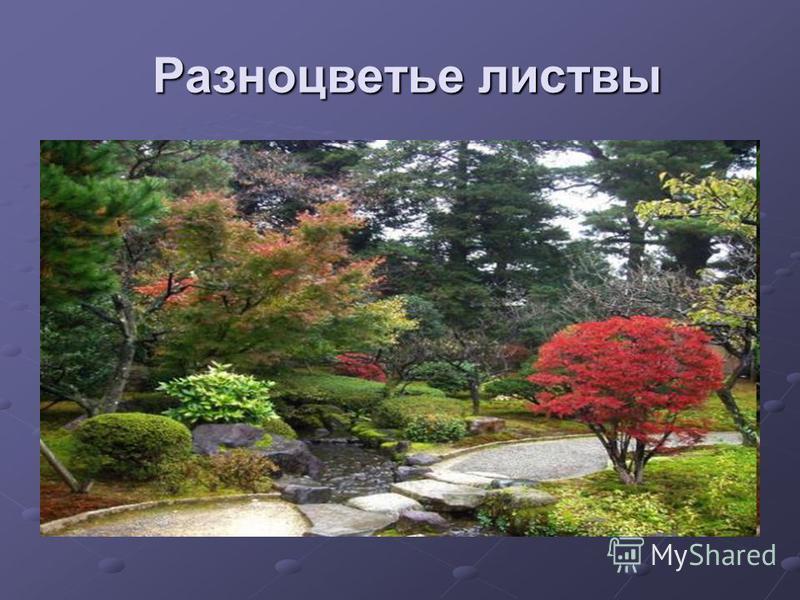 Разноцветье листвы Разноцветье листвы