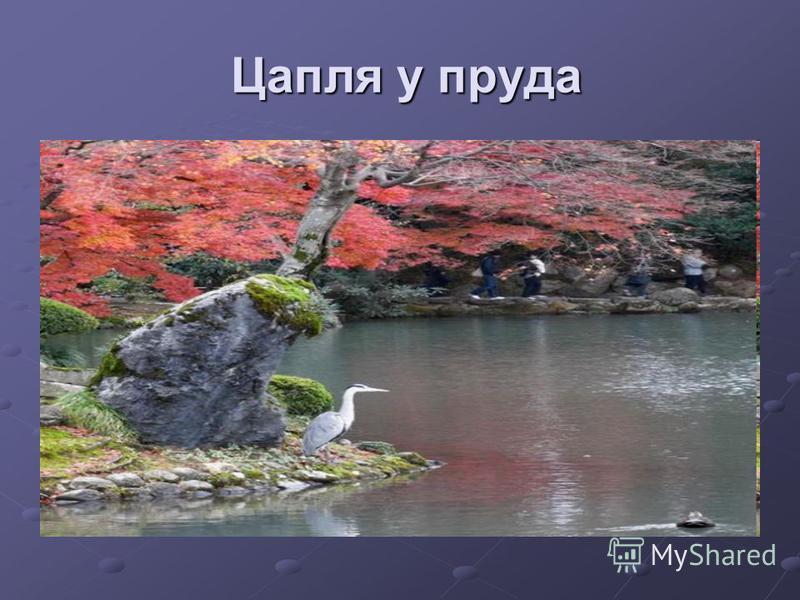 Цапля у пруда Цапля у пруда