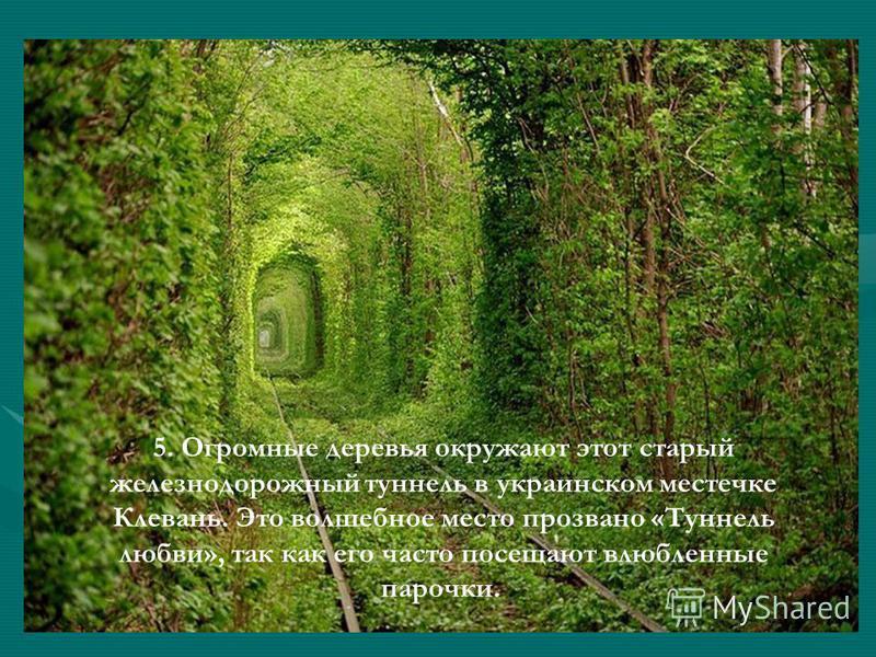 5. Огромные деревья окружают этот старый железнодорожный туннель в украинском местечке Клевань. Это волшебное место прозвано «Туннель любви», так как его часто посещают влюбленные парочки.