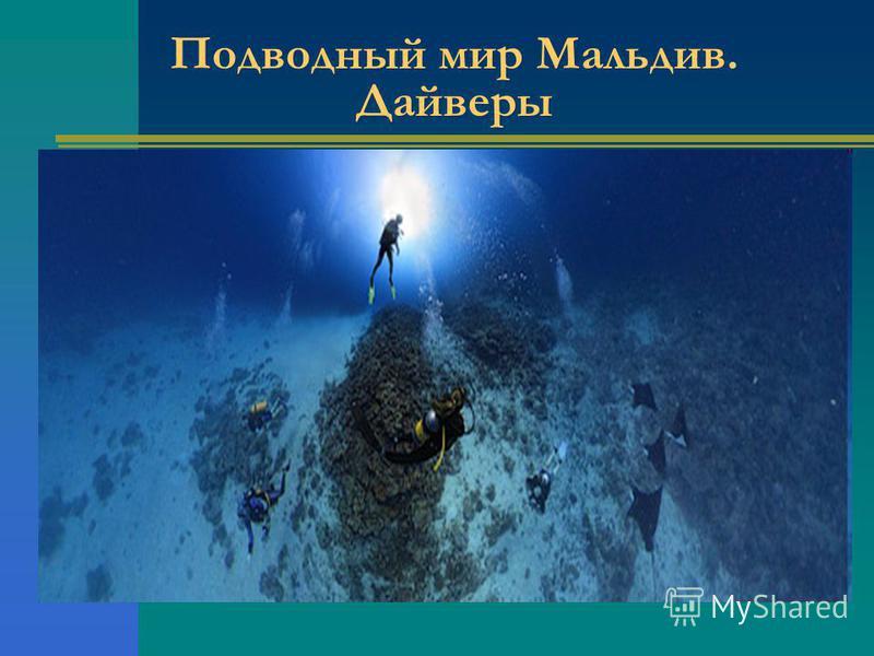 Подводный мир Мальдив. Дайверы