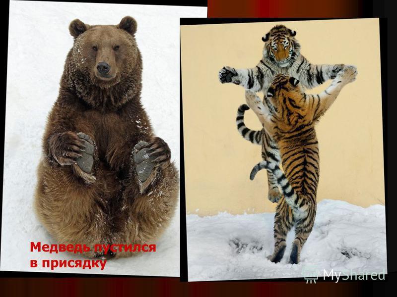 Медведь пустился в присядку