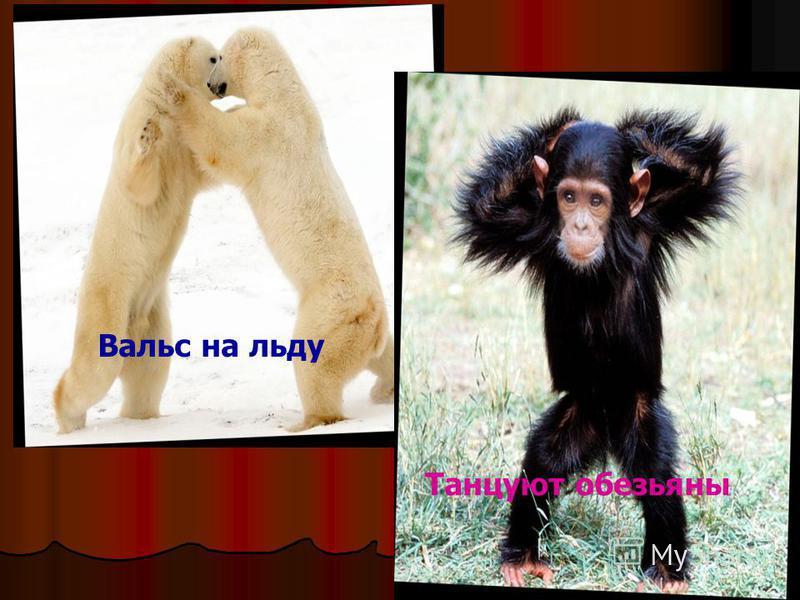 Вальс на льду Танцуют обезьяны